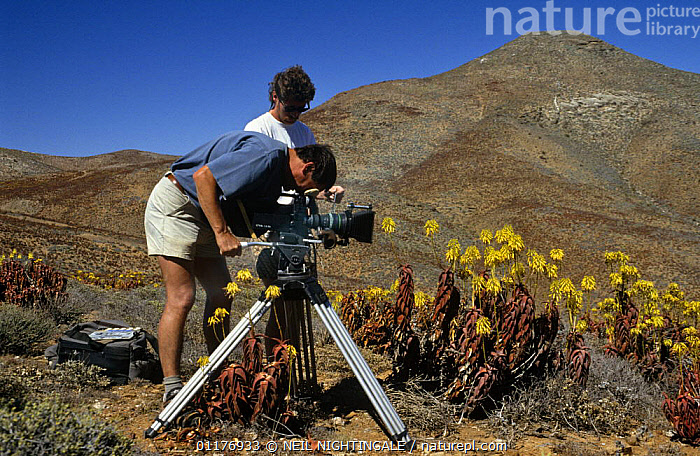 """Camerman Richard Ganniclifft filming Aloe plants on location in South Africa for BBC television series """"Private Life of Plants"""", early 1990s  ,  CAMERA,CAMERAS,FILMING,FILMING IN WILD,FLOWERS,LANDSCAPES,MOUNTAINS,PEOPLE,PLANTS,SOUTHERN AFRICA  ,  NEIL NIGHTINGALE"""