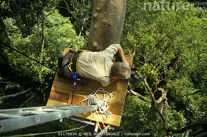 """Hugh Miles filming from a canopy platform in the tropical rainforest of Sabah, Borneo. On location for BBC television series """"Private Life of Plants"""", early 1990s  ,  ASIA,CAMERA,CAMERAS,FILMING,FILMING IN WILD,MALAYSIA,PEOPLE,PLANTS,SOUTH EAST ASIA,TREES,TROPICAL RAINFOREST  ,  NEIL NIGHTINGALE"""
