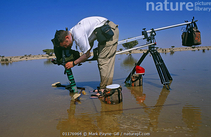 Mark Payne Gill on location in the central desert of Oman, filming Fairy shrimps {Triops sp} in a desert lake after heavy rainfall, Jan 1997. For BBC television programme  ,  ARABIA,CAMERA,CAMERAS,DESERTS,EQUIPMENT,FILMING IN WILD,HUMOROUS,INVERTEBRATES,LAKES,LANDSCAPES,MIDDLE EAST,NHU,PEOPLE,SHRIMPS,TECHNIQUES,WET SEASON,Concepts  ,  Mark Payne-Gill