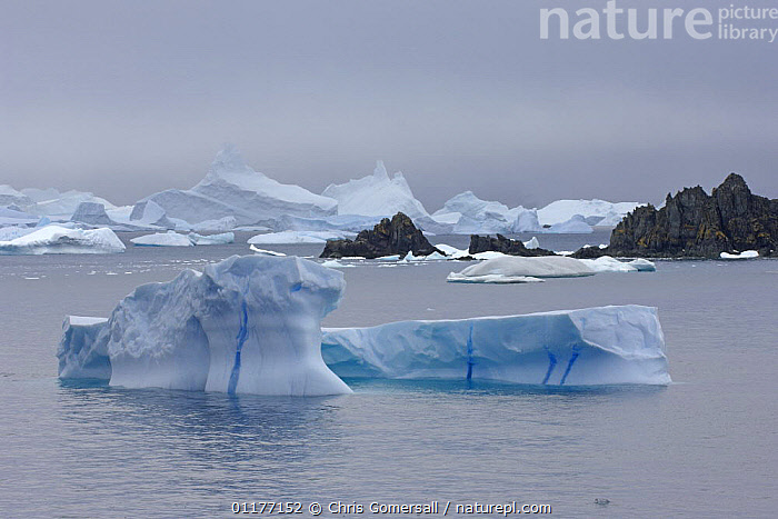 Blue icebergs. Laurie Island, South Orkney Isles, Antarctica. January 2007.  ,  ANTARCTICA,ATLANTIC OCEAN,COASTAL WATERS,ICE,ICEBERGS,LANDSCAPES,Marine,USA  ,  Chris Gomersall