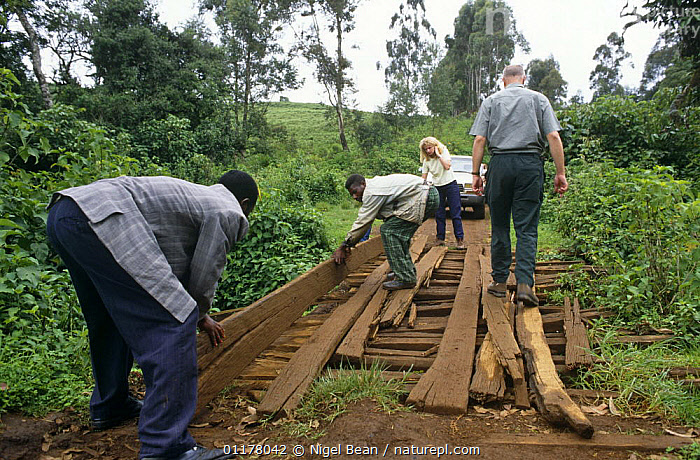 Laying planks to mend bridge to enable vehicle to cross river, Kilum-Ijim Forest Project zone, Bamenda Highlands, North West Province, Cameroon  ,  BRIDGES,LIFE OF BIRDS,PEOPLE,RESERVE,ROADS,TROPICAL RAINFOREST,VEHICLES,WEST AFRICA,Africa,WEST-AFRICA  ,  Nigel Bean