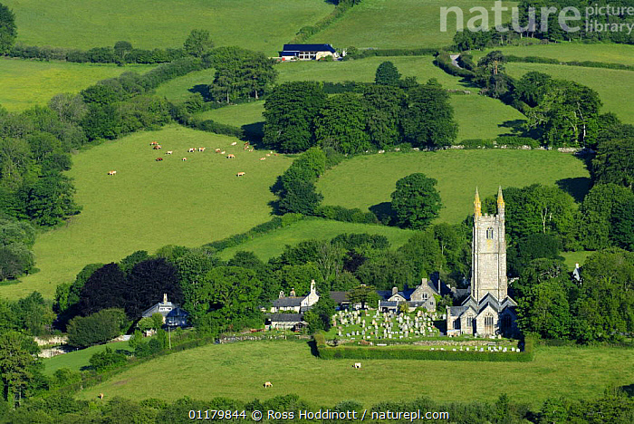 Widecome-in-the-Moor village church in summer, Dartmoor National Park, Devon. UK  ,  CHURCHES,COUNTRYSIDE,cows,EUROPE,fields,hedges,LANDSCAPES,LIVESTOCK,RESERVE,UK,villages,United Kingdom,British,ENGLAND  ,  Ross Hoddinott