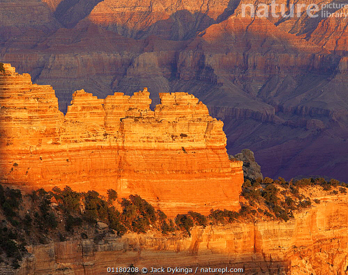 North Rim of Cape Royal at sunset, Grand Canyon NP, Arizona, USA, canyons,DUSK,LANDSCAPES,north america,NORTH AMERICA,RESERVE,ROCK FORMATIONS,SUNSET,TREES,USA,Geology,Plants, Jack Dykinga