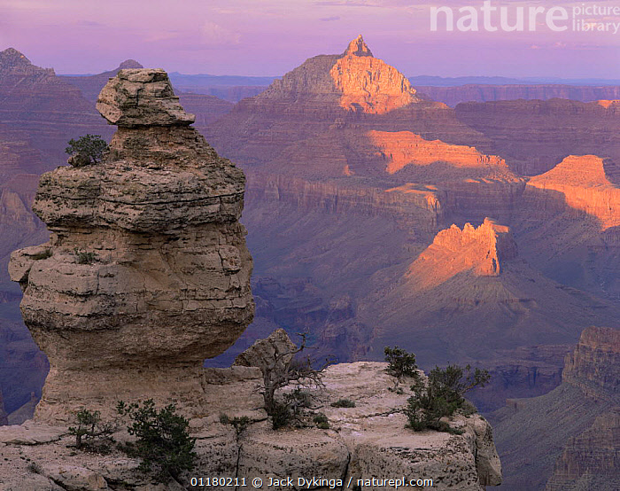 """South Rim rock formation known as """"Duck on a Rock"""" at sunset, with the """"Vishnu Temple"""" in the background, Grand Canyon NP, Arizona, USA, canyons,DUSK,LANDSCAPES,north america,NORTH AMERICA,RESERVE,ROCK FORMATIONS,ROCKS,SUNSET,TREES,USA,valleys,Geology,Plants, Jack Dykinga"""