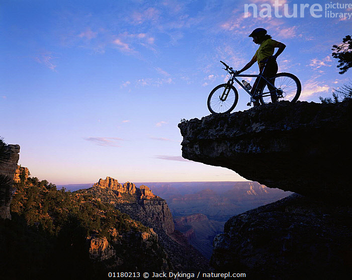 Mountain Biker stood on a ridge at sunrise overlooking the Grand Canyon, Grand Canyon NP, Arizona, USA, bike,bikes,biking,canyons,DAWN,LANDSCAPES,lesiure,north america,NORTH AMERICA,PEOPLE,RESERVE,ROCK FORMATIONS,ROCKS,SILHOUETTES,SUNRISE,TREES,USA,valleys,Geology,Plants, Jack Dykinga