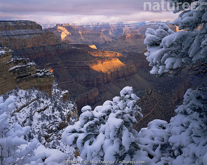 Snow on Pinyon Pines (Pinus edulis) at sunrise, East Rim Drive, South Rim, Grand Canyon NP, Arizona, USA, canyons,CLOUDS,CONIFEROUS,DAWN,DRAMATIC,LANDSCAPES,north america,NORTH AMERICA,RESERVE,ROCK FORMATIONS,ROCKS,SNOW,SUNRISE,TREES,USA,valleys,VERTICAL,Weather,Geology,Plants, Jack Dykinga