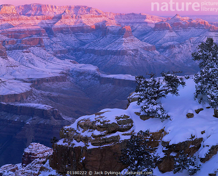 Moran point in the snow at sunrise, with the North Rim in the background, Grand Canyon NP, Arizona, USA, ATMOSPHERIC,canyons,DAWN,LANDSCAPES,north america,NORTH AMERICA,RESERVE,ROCK FORMATIONS,SNOW,SUNRISE,TREES,USA,valleys,Geology,Plants, Jack Dykinga
