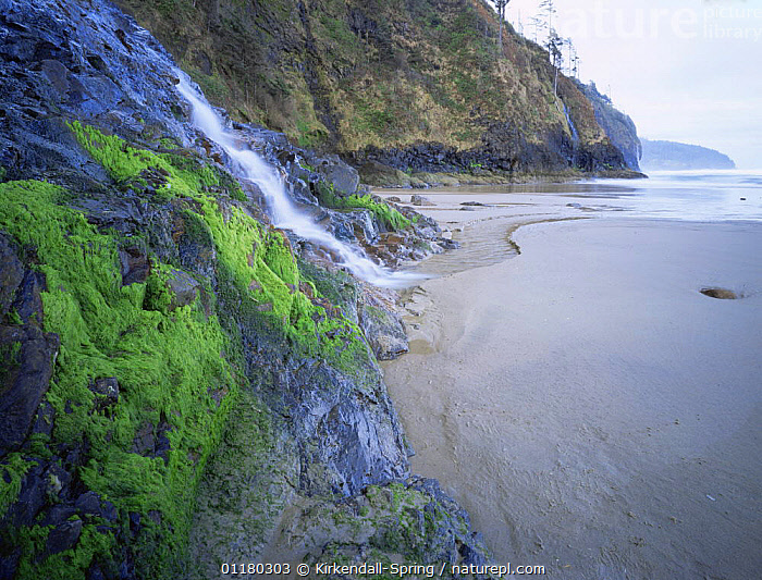 Waterfall  down cliff  onto beach, Cape Lookout State Park, Oregon, USA, BEACHES,CLIFFS,COASTS,LANDSCAPES,NORTH AMERICA,NORTH AMERICA,RESERVE,USA,WATER,WATERFALLS,Geology, Kirkendall-Spring