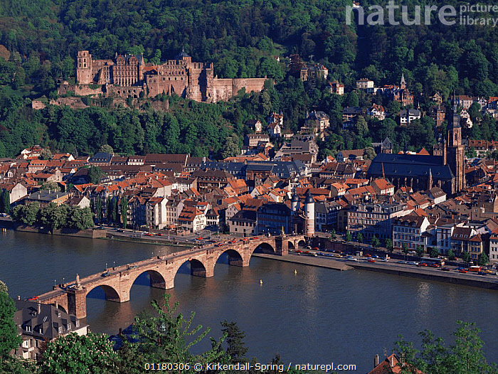 Heidelberg Castle and the old town viewed from across the Necker River, Heidelberg, Germany, Europe, BRIDGES,CASTLES,CITIES,EUROPE,FORESTS,GERMANY,HISTORIC,LANDSCAPES,RIVERS,TOWNS,WATER,WOODLANDS, Kirkendall-Spring