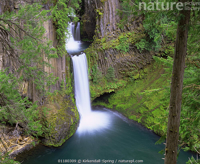 Toketee Falls in the North Umpqua River Valley, Umpqua National Forest, Oregon, USA  ,  CLIFFS,LANDSCAPES,NORTH AMERICA,NORTH AMERICA,OREGON,RIVERS,ROCK FORMATIONS,ROCKS,TREES,USA,WATER,WATERFALLS,Geology,Plants  ,  Kirkendall-Spring
