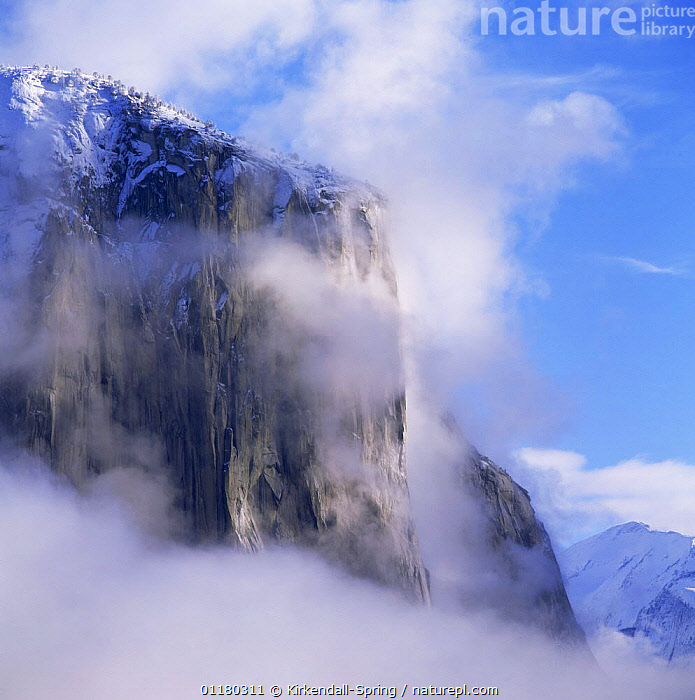 El Capitan in the mist after a winter storm, Yosemite NP, California, USA, ATMOSPHERIC,CALIFORNIA,CLIFFS,LANDSCAPES,MIST,NORTH AMERICA,NORTH AMERICA,RESERVE,ROCK FORMATIONS,ROCKS,SNOW,USA,Geology, Kirkendall-Spring