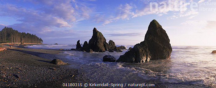 Rialto Beach, Olympic NP, Washington, USA, BEACHES,COASTS,EROSION,LANDSCAPES,NORTH AMERICA,NORTH AMERICA,PACIFIC,PANORAMIC,RESERVE,ROCK FORMATIONS,ROCKS,SKIES,USA,WASHINGTON,WATER,WOODLANDS,Geology, Kirkendall-Spring