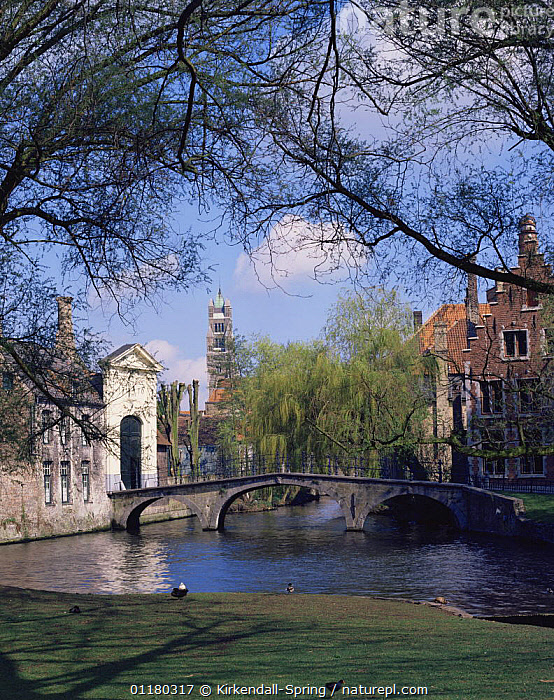 View of the River Dijver and historic buildings in Bruges, Belgium, Europe  ,  BELGIUM,BRIDGES,BUILDINGS,CITIES,EUROPE,LANDSCAPES,RIVERS,TREES,VERTICAL,WATER,Plants  ,  Kirkendall-Spring