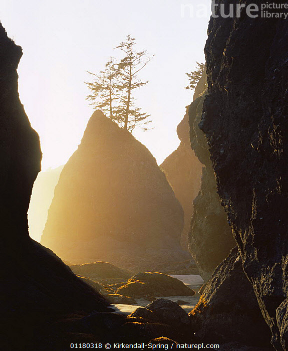 Point of Arches at sunset, Pacific Coast, Olympic NP, Washington, USA, ATMOSPHERIC,COASTS,DUSK,LANDSCAPES,NORTH AMERICA,NORTH AMERICA,PEACEFUL,RESERVE,ROCK FORMATIONS,ROCKS,SILHOUETTES,SUNSET,TREES,USA,VERTICAL,WASHINGTON,Concepts,Geology,Plants, Kirkendall-Spring