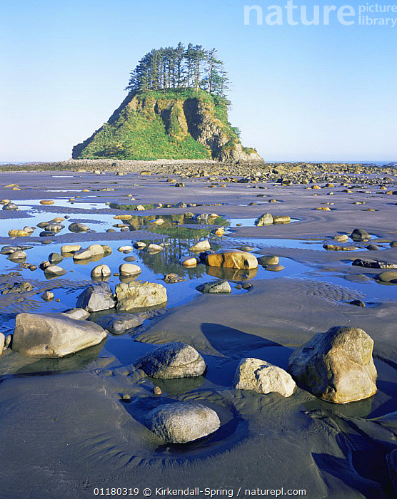 Rocks and tidal pools on Shi Shi Beach, Pacific Coast, Olympic NP, Washington, USA, BEACHES,COASTS,LANDSCAPES,NORTH AMERICA,NORTH AMERICA,REFLECTIONS,RESERVE,ROCK FORMATIONS,ROCKS,TREES,USA,VERTICAL,WASHINGTON,WATER,Geology,Plants, Kirkendall-Spring