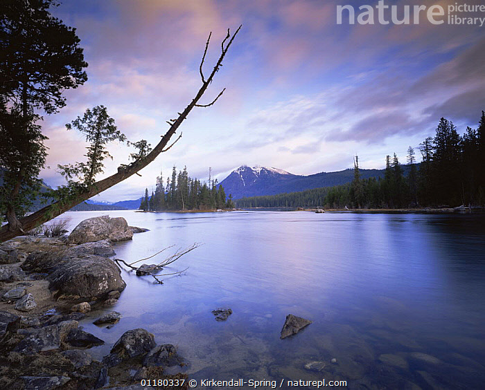 Sunrise over Lake Wenatchee at the head of the Wenatchee River, Lake Wenatchee State Park, Washington, USA, CLOUDS,DAWN,LAKES,LANDSCAPES,MOUNTAINS,NORTH AMERICA,NORTH AMERICA,PEACEFUL,RESERVE,RIVERS,ROCKS,SUNRISE,TREES,USA,WATER,Concepts,Weather,Plants, Kirkendall-Spring