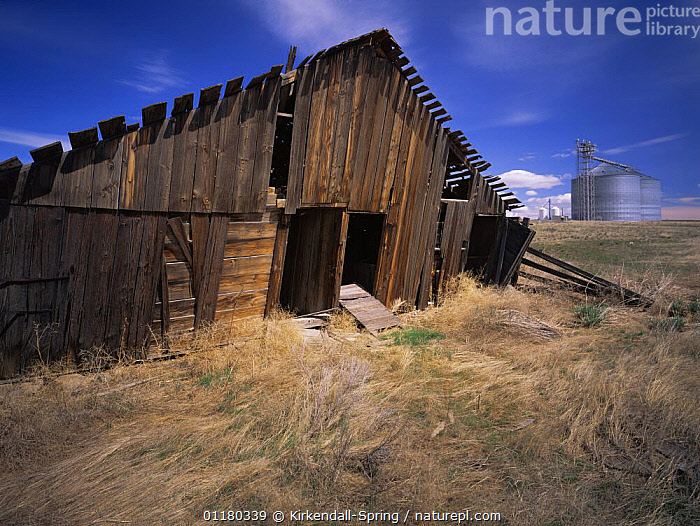 Old lopsided barn with grain silos in the background, Douglas County, Washington, USA, BUILDINGS,FARMLAND,FIELDS,LANDSCAPES,NORTH AMERICA,NORTH AMERICA,RURAL,SILOS,USA, Kirkendall-Spring