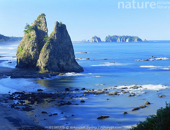 View of sea stacks on the Pacific Coast, Olympic NP, Washington, USA, COASTS,EROSION,LANDSCAPES,NORTH AMERICA,NORTH AMERICA,PACIFIC,RESERVE,ROCK FORMATIONS,ROCKS,USA,WATER,Geology, Kirkendall-Spring