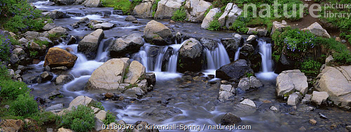 Edith Creek in Mount Rainier NP, Washington, USA, CREEKS,LANDSCAPES,NORTH AMERICA,NORTH AMERICA,PANORAMIC,PLANTS,RESERVE,RIVERS,ROCKS,USA,WATER, Kirkendall-Spring