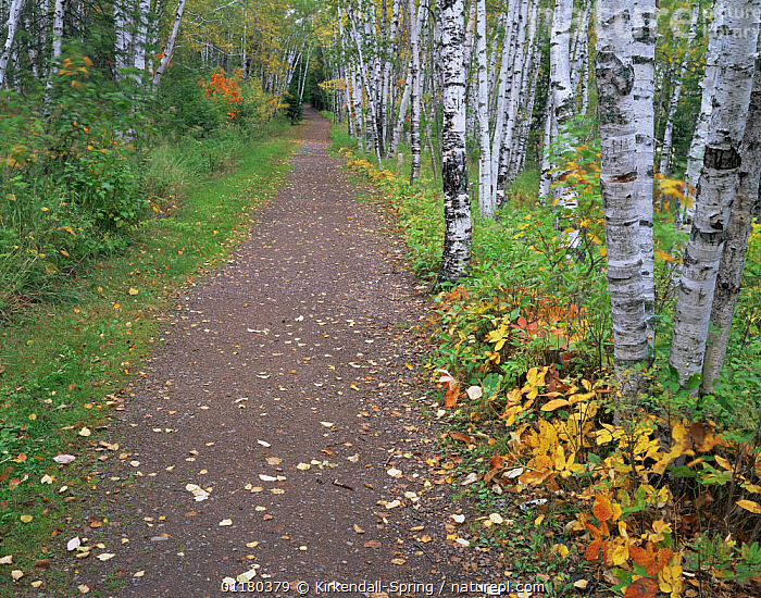 Two Harbors Hiking Trail / path in Split Rock Lighthouse State Park, Minnesota, USA, AUTUMN,FORESTS,LANDSCAPES,NORTH AMERICA,NORTH AMERICA,PATHS,RESERVE,ROADS,TREES,USA,WOODLANDS,Plants, Kirkendall-Spring