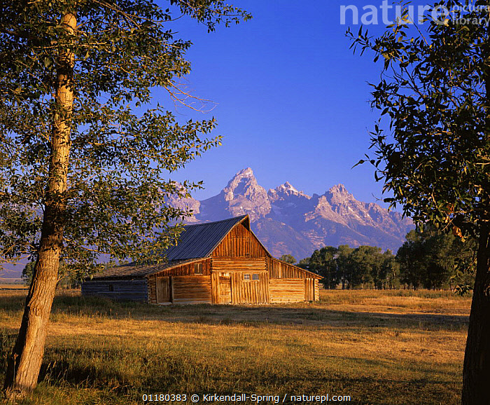 John Moulton Barn on Mormon Row at the base of the Grand Teton Mountains, Grand Teton NP, Wyoming, USA, BARNS,BUILDINGS,HOUSES,LANDSCAPES,MOUNTAINS,NORTH AMERICA,NORTH AMERICA,RESERVE,TREES,USA,Plants ,Rocky Mountains,, Kirkendall-Spring