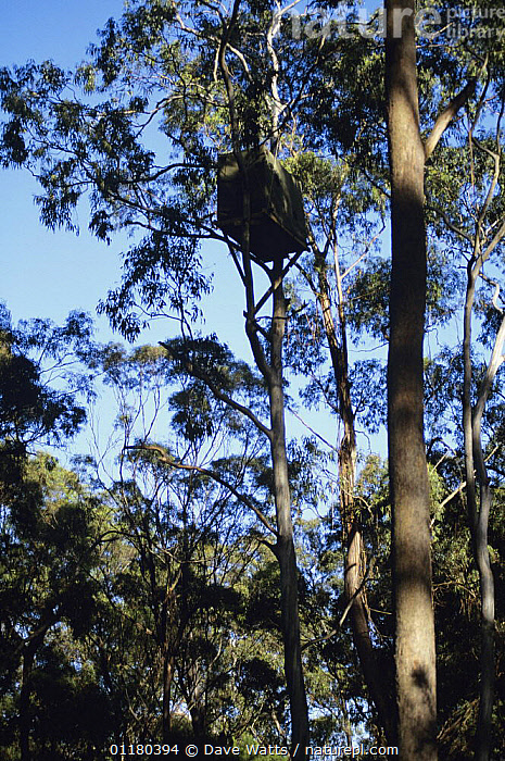 Photographer's hide at White-bellied Sea-Eagle nest