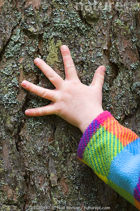 Child's hand feeling Pine bark, UK, ABSTRACTS,BARK,CHILD,CHILDHOOD,CHILDREN,CONCEPTS,CONIFERS,CONNECTING,CONNECTION,EXPERIENCE,FEELING,FINGERS,GYMNOSPERMS,HANDS,OUTDOORS,PEOPLE,PINACEAE,PINES,PLANTS,REWILDING,TEXTURE,TOUCH,VERTICAL, Niall Benvie