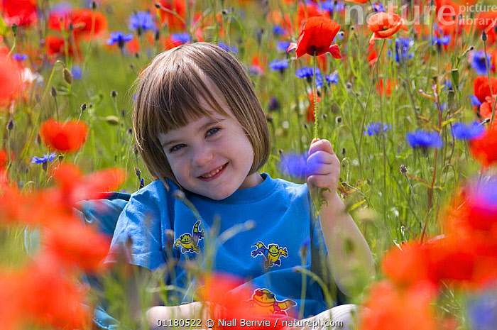 Portrait of Young girl sitting in field of Common poppies {Papaver rhoeas} and Cornflower, Scotland, UK, June, CHILD,CHILDREN,DICOTYLEDONS,EUROPE,FARMLAND,OUTDOORS,PAPAVERACEAE,PEOPLE,PLANTS,PORTRAITS,RELAXATION,REWILDING,SCOTLAND,SUMMER,WILDFLOWER,YOUNG,United Kingdom,British, Niall Benvie