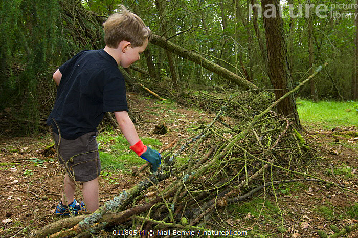 Young boy helping to build a den in forest, Letham, Fife, Scotland, UK, BOY,BRANCHES,BUILDING,CHILDREN,ORANGE,OUTDOORS,PLAYING,REWILDING,SCOTLAND,WOODLANDS,Europe, Niall Benvie