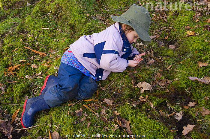 Young girl examining a worm in the forest, Fife, Scotland, UK - model released, CHILD,CHILDREN,EUROPE,MOSS,OUTDOORS,PEOPLE,PRIMATES,SCOTLAND,VERTEBRATES,WOODLANDS,WORMS,Mammals, Niall Benvie