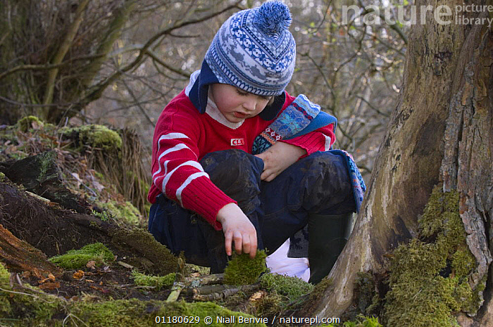 Young boy searching for invertebrates in the forest, Fife, Scotland, UK - model released, BEHAVIOUR,CHILD,CHILDREN,EUROPE,MOSS,OUTDOORS,PEOPLE,PRIMATES,SCOTLAND,TREES,VERTEBRATES,WOODLANDS,Plants,Mammals, Niall Benvie