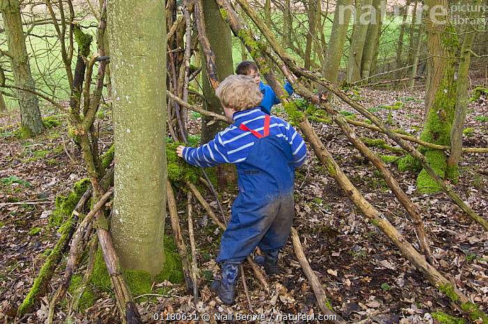 Children playing outdoors building a shelter in the woods, Fife, Scotland, UK - model released, BEHAVIOUR,CHILD,CONSTRUCTION,EUROPE,NATURE,PEOPLE,PLAY,PRIMATES,SCOTLAND,TREES,VERTEBRATES,WOODLANDS,Plants,Communication,Mammals, Niall Benvie
