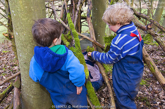 Three children playing outdoors, building a shelter in the woods, Fife, Scotland, UK - model released, BEHAVIOUR,CHILD,CHILDREN,CONSTRUCTION,EUROPE,NATURE,PEOPLE,PLAY,PRIMATES,SCOTLAND,TREES,VERTEBRATES,WOODLANDS,Plants,Communication,Mammals, Niall Benvie