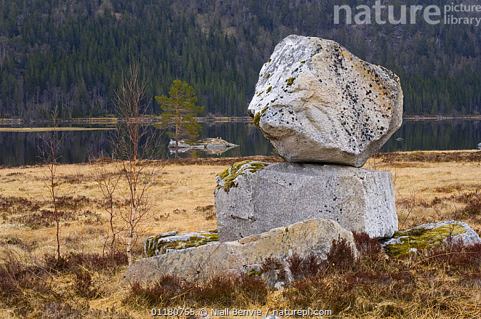 Rocks left by glacier movement - glacial erratic, in a lake-side bog, May, Songli, S�r-Tr�ndelag, Norway, BOGS,EUROPE,GEOLOGY,GLACIAL,GRANITE,LAKES,LANDSCAPES,NORWAY,ROCKS,SCANDINAVIA,WATER,Wetlands, Scandinavia, Niall Benvie