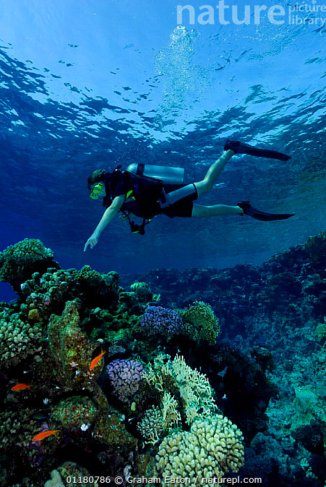 Diver at coral reef, Red Sea, Egypt, CORAL REEFS,DIVING,FISH,LANDSCAPES,PEOPLE,RED SEA,UNDERWATER,Marine,NORTH-AFRICA,Africa, Graham Eaton