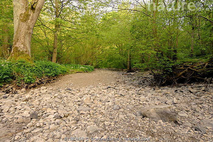 Dry riverbed of River Alyn during the summer. The River dissapears underground during dry summers, Mold, Clwyd, Wales, UK, May 2007, DROUGHT,DRY SEASON,EUROPE,LANDSCAPES,LIMESTONE,RIVERS,WALES,WOODLANDS,United Kingdom,British, Graham Eaton
