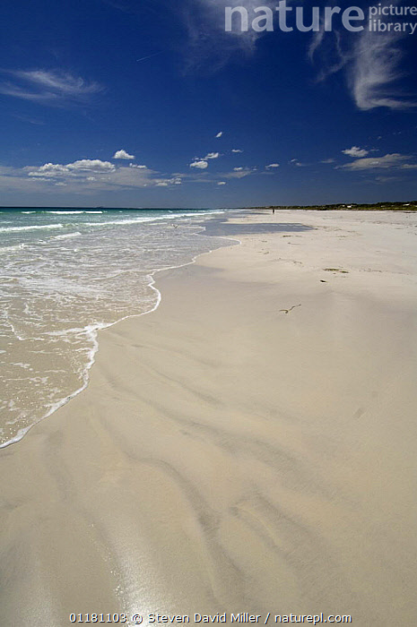 Cape Le Grand Beach, Cape Le Grand National Park, Esperance, Western Australia, Summer  ,  AUSTRALASIA,AUSTRALIA,BEACHES,COASTS,LANDSCAPES,sand,sea,VERTICAL,Catalogue1  ,  Steven David Miller