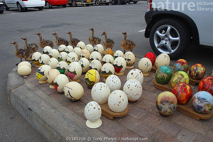 Ostrich egg curios for sale in carpark, Outshorrn, Little Karoo, South Africa, ARTIFACTS,BIRDS,CRAFTS,EGGS,FLIGHTLESS,SOUTHERN AFRICA,TOURISM,TRADE,TRADITIONAL, Tony Phelps