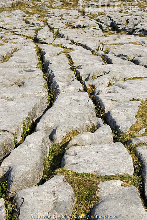 Limestone Pavement, The Burren, County Clare, Republic of Ireland  ,  CLINT,EIRE,EROSION,EUROPE,GEOLOGY,GRYKE,ROCK FORMATIONS,ROCKS,WEATHERING,  ,  Adrian Davies