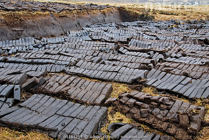 Peat blocks dug from peat bog and laid out to dry, Achill Island, County Mayo, Ireland.  ,  BOGS,EUROPE,FUEL,HARVESTING,IRELAND,PEAT,SUSTAINABLE,TRADITIONAL,Wetlands  ,  Adrian Davies