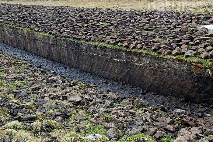 Peat blocks dug from peat bog and laid out to dry, Achill Island, County Mayo, Ireland.  ,  BOG,BOGS,CUTTING,EUROPE,FUEL,HARVESTING,IRELAND,PEAT,SUSTAINABLE,TRADITIONAL,Wetlands  ,  Adrian Davies