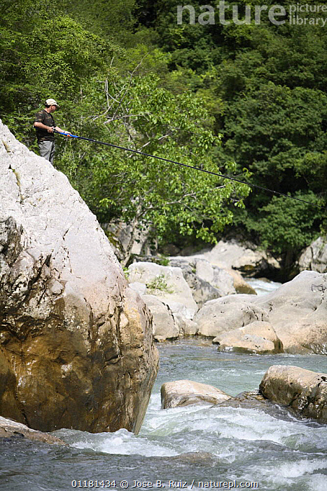 Man fishing for Brown trout {Salmo trutta} in white waters, Libena, Picos de Europa, Spain, EUROPE,FISH,FISHING,FRESHWATER,LEISURE,OSTEICHTHYES,PEOPLE,RIVERS,RIVER TROUT,SPAIN,TROUT,VERTEBRATES,VERTICAL, Jose B. Ruiz