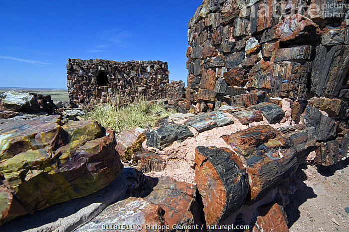 Agate House, an Indian pueblo (community) built with petrified wood. Petrified Forest National Park, Arizona, USA. 2007  ,  BUILDINGS,CULTURES,FOSSILS,HISTORICAL,LANDSCAPES,NATIONAL PARKS,NORTH AMERICA,SONORAN DESERT,TRADITIONAL,TREES,USA,Plants  ,  Philippe Clement