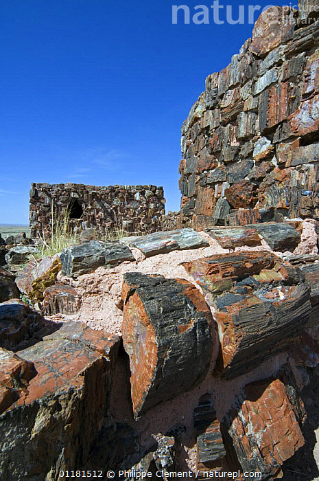 Agate House, an Indian pueblo (community) built with petrified wood. Petrified Forest National Park, Arizona, USA. 2007  ,  BUILDINGS,CULTURES,FOSSILS,HISTORICAL,LANDSCAPES,NATIONAL PARKS,NORTH AMERICA,SONORAN DESERT,TRADITIONAL,TRESS,USA,VERTICAL ,trees,Plants  ,  Philippe Clement