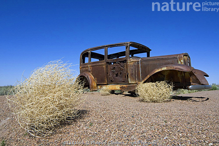 Prickly Russian Thistle / Tumbleweed (Salsola tragus / Salsola iberica) and rusty old car. Arizona, USA 2007, CHENOPODIACEAE,CONCEPTS,DICOTYLEDONS,LANDSCAPES,NORTH AMERICA,NOSTALGIA,OLD,PLANTS,SONORAN DESERT,USA,VEHICLES, Philippe Clement