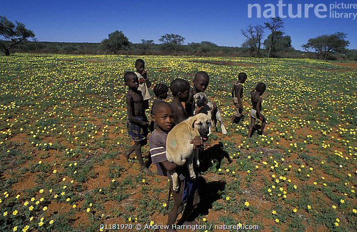Children with Anatolian puppy (Canis familiaris). Namibia, East Africa. Ref: Cheetah Conservation Fund  ,  AFRICA,BIG CATS,CARNIVORES,CHEETAHS,CHILDREN,CONSERVATION,DOGS,EAST AFRICA,FIELDWORK,guard dog,MAMMALS,namibia,PEOPLE,VERTEBRATES , PETS  ,  Andrew Harrington