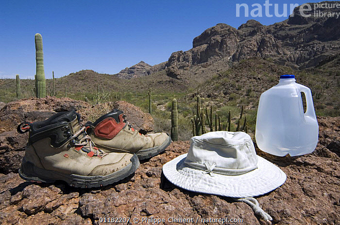Sturdy boots, a brimmed hat and lots of water is what you need when hiking into the Sonoran desert, Organ Pipe National Monument, Arizona, USA May 2007  ,  CACTUS,DESERTS,HIKING,LANDSCAPES,NORTH AMERICA,NORTH AMERICA,PEOPLE,RESERVE,USA  ,  Philippe Clement