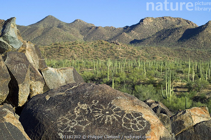 Rock art in the Tucson Mountains, created by the Hohokam Indians, showing geometrical shaped petroglyphs, Saguaro NP, Arizona, USA May 2007  ,  ANCIENT,ART,CACTUS,DESERTS,LANDSCAPES,MOUNTAINS,NORTH AMERICA,NORTH AMERICA,RESERVE,ROCKS,USA  ,  Philippe Clement