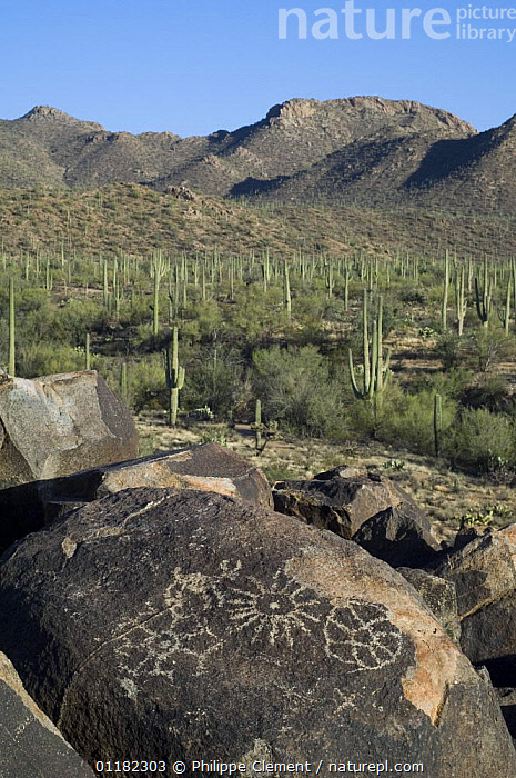 Rock art in the Tucson Mountains, created by the Hohokam Indians, showing geometrical shaped petroglyphs, Saguaro NP, Arizona, USA May 2007  ,  ANCIENT,ART,CACTUS,DESERTS,LANDSCAPES,MOUNTAINS,NORTH AMERICA,NORTH AMERICA,RESERVE,ROCKS,USA,VERTICAL  ,  Philippe Clement
