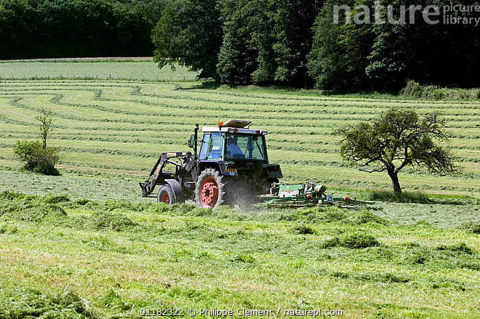 Tractor with mower cutting grass for hay, Luxembourg  ,  AGRICULTURE,EUROPE,FARMLAND,HARVESTING,LUXEMBOURG  ,  Philippe Clement